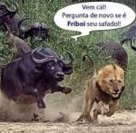 26fev2014--roberto-carlos-virou-piada-na-internet-apos-o-comercial-dele-pra-a-friboi-ir-ao-ar-na-televisao-1393459832139_500x493