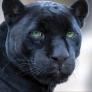 Negra Panther